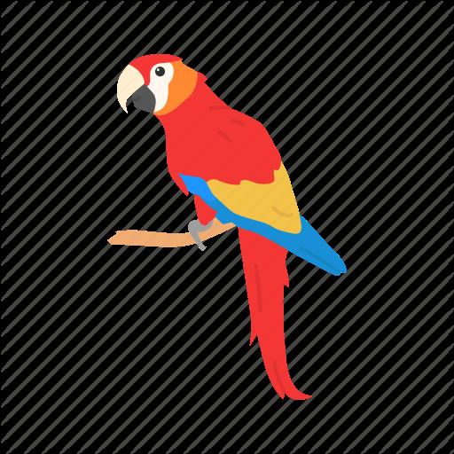 macaw bird for sale